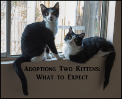 Adopting Two Kittens: What to Expect