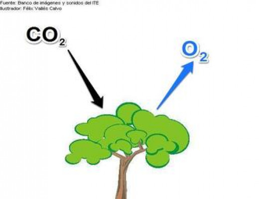 Carbon Dioxide goes in, Oxygen comes out.