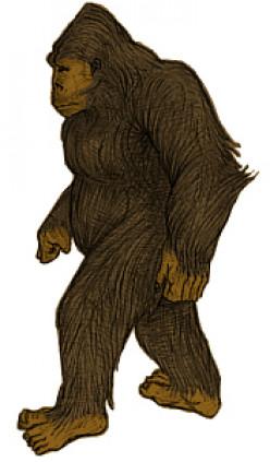 Bigfoot in Florida: Skunk Ape Sightings