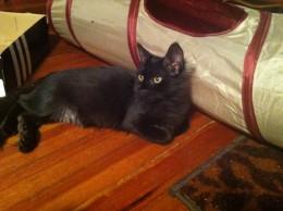 new kitten 2013