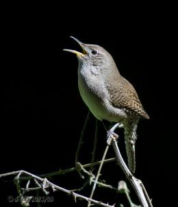 'birds song' from Doris Sharrock flickr.com