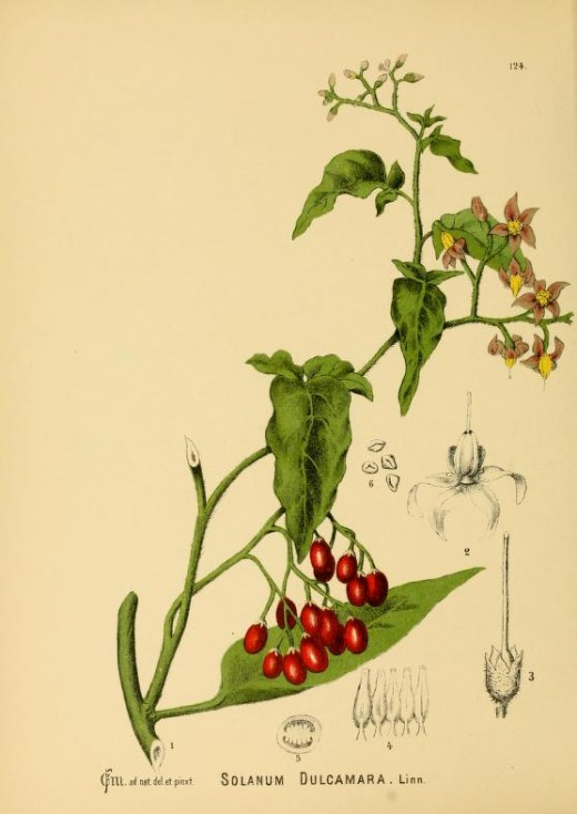 American Medicinal Flora {!800's}