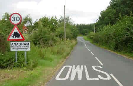 Owls...???