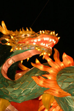 Are Dragons Real?The Morphology Of Dragons
