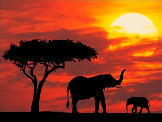 Two elephants greet under the sunset.
