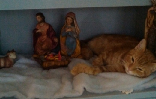 My Milo Kitty wants to be a part of the Nativity this year...his new preferred spot; baby grandson put the toy in the manger.