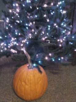Have any of you hubbers out there ever heard of a Christmas pumpkin?