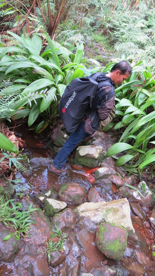 Swampy trek.