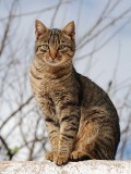 Poetry for Kids: Haiku Poems About Cats