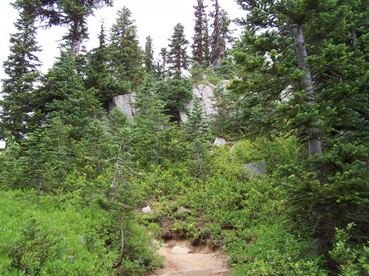 The path to publication can be rocky and steep
