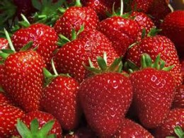 Can't tell by looking at them if they are, or are not, genetically modified
