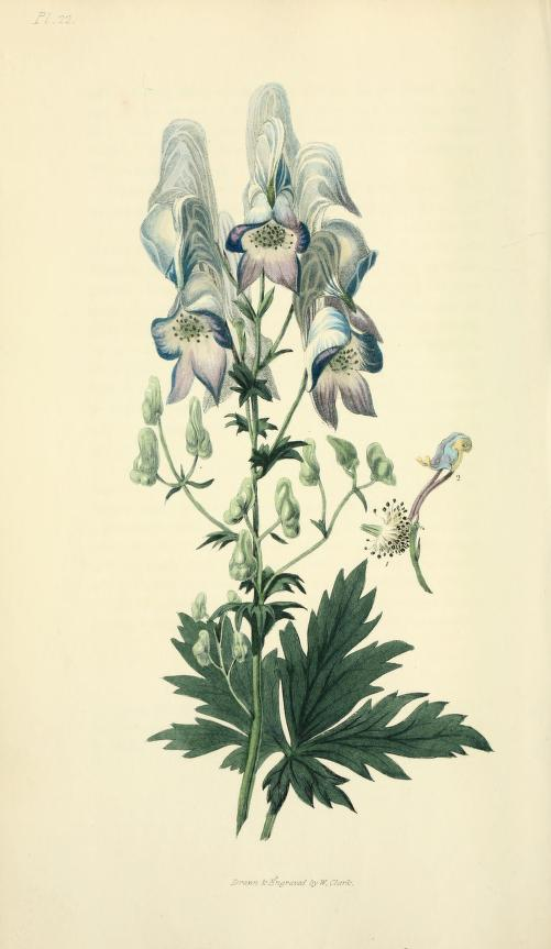 Flora Conspicua 1826 -Richard Morris and William Clark