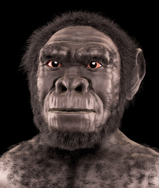 Homo Habilis - Forensic Facial Reconstruction/Approximation