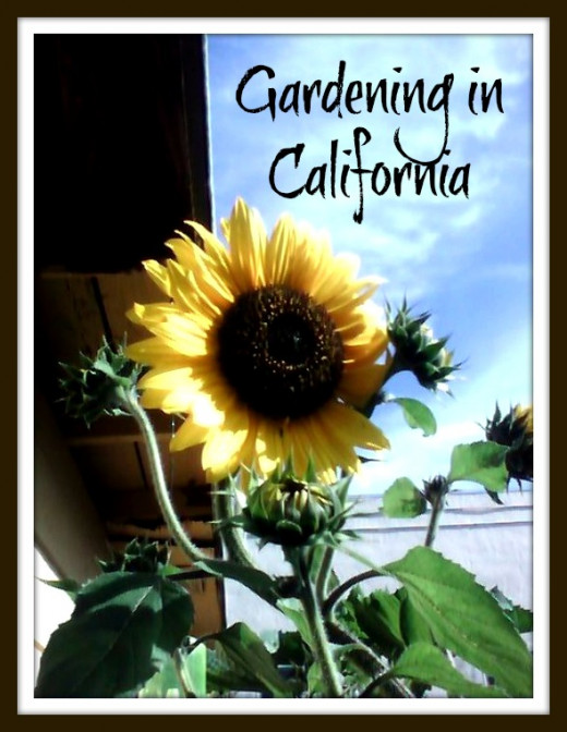 I love this photo-it was taken in November of 2007 in my California Garden