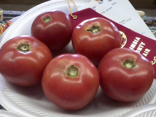 These are Arkansas Traveler pink tomatoes that my son grew for open show at our local fair this past summer.