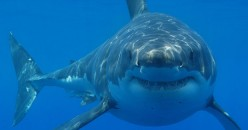 South Africa, Sharks, Sea Snakes and Other Dangers in The Water Whilst On Vacation