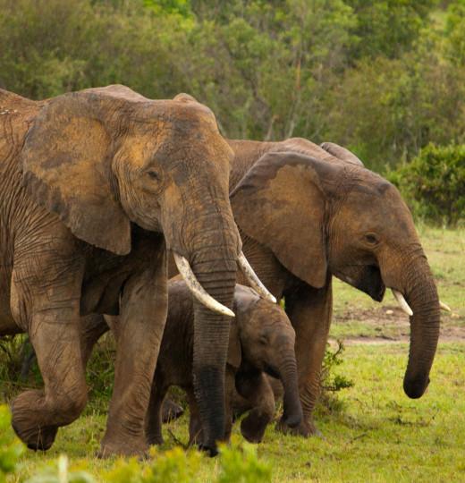 A elephant family.