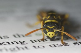 Make more money with error-free copy.  Editing Wasp by Nick Harris1