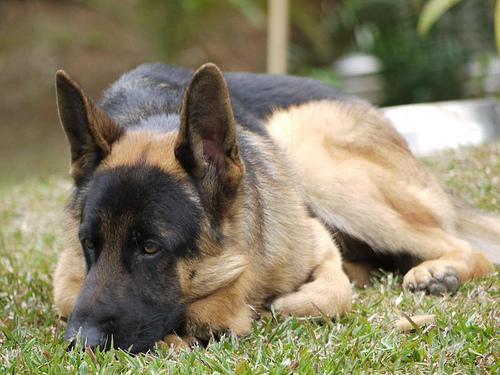 A tough dog deserves a tough chew.