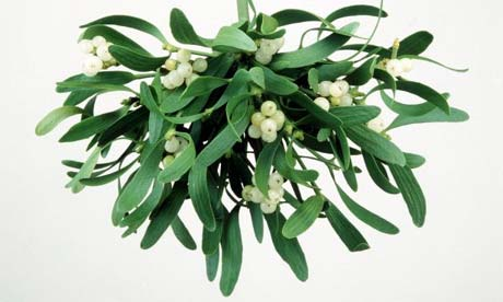 The Mistletoe with Its White Berries