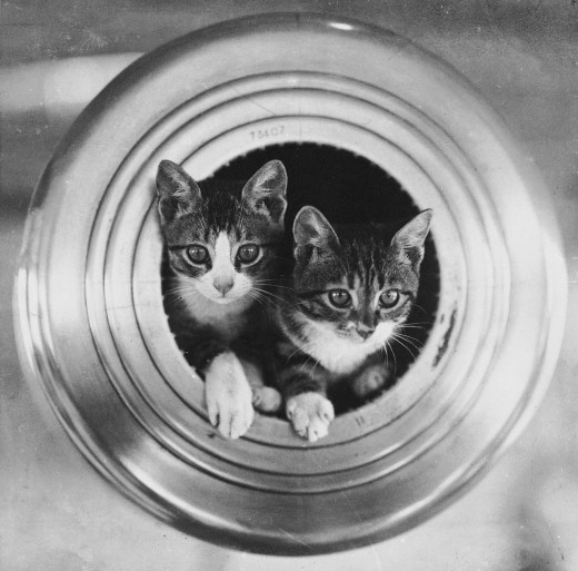 Kittens in a ships cannon