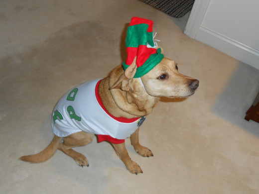 If you are suffering from The Christmas Crazies, here's a picture to make you laugh and give you some stress relief. It's my dog Reeses, who actually likes to dress up. Isn't she sweet?!!!