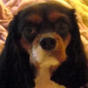 LadyBolet profile image