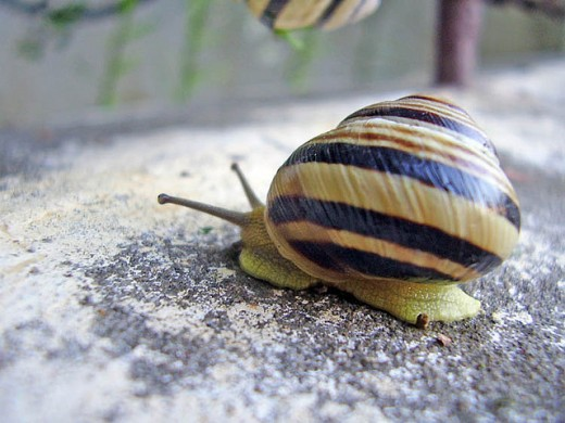 This snail has a sense of humor!