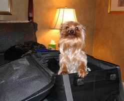 How To Be Invited Back - Pet Friendly Travel Tips