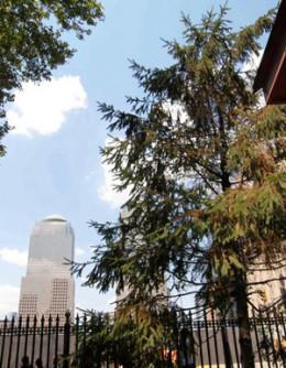 The Erez Tree of Hope near Ground Zero