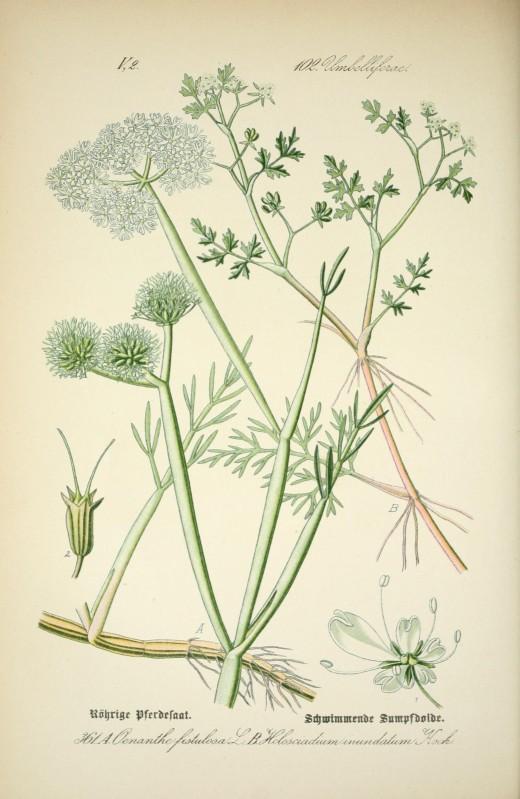 Dr Thome's Flora-W.Otto Thome 1903