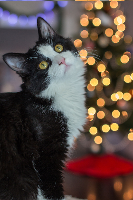 Moving your subjects away from your background, allows for a better bokeh effect.