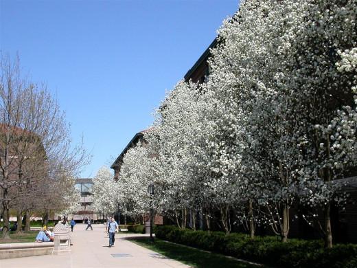College campus in spring