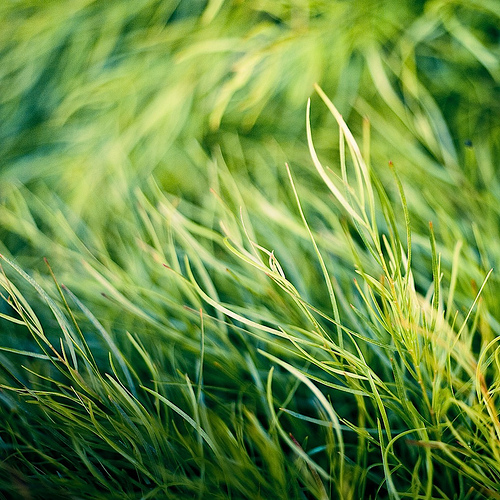Grass Texture from Cubba Gallery flickr.com
