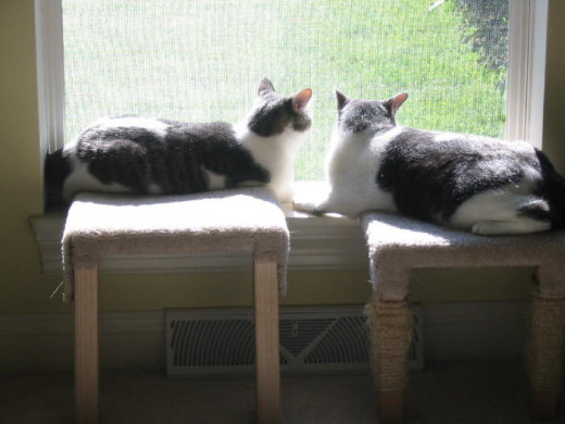 Dixie and Misty sharing their favorite window view peacefully
