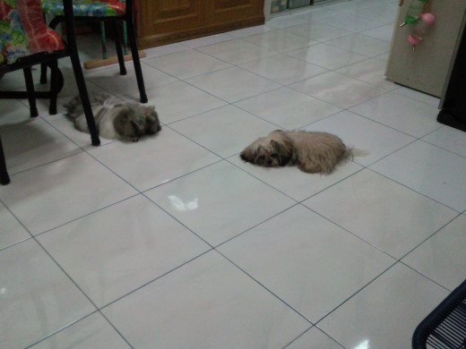 Chiko and Choky, staying away from each other likely after quarrel lol :D