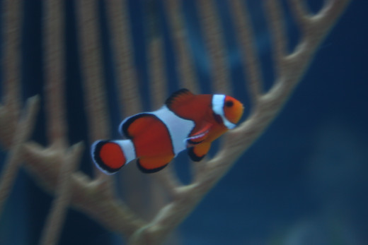 While many children may love Nemo, saltwater fish require a lot of care.