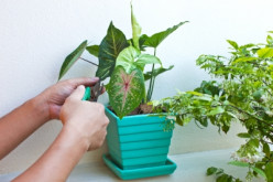 Indoor Plants that Help to Clean the Air inside your Home Naturally
