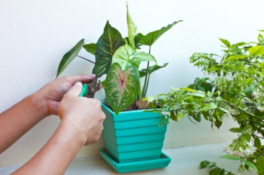 Indoor Plants to Clean the Air Inside Home
