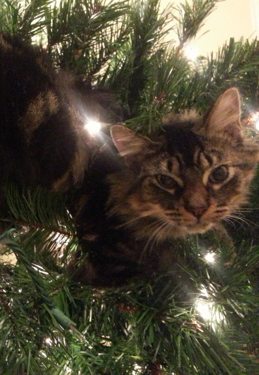 George is the first ornament on the tree this year!