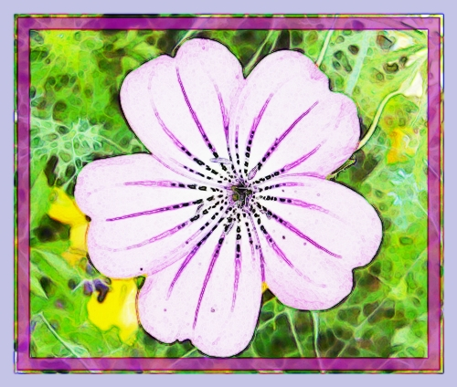 You may use this flower image to make a card for your home made gift voucher.