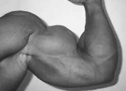 Tips on Growing Bigger, Stronger, more Muscular Arms