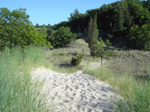 Vegetation at Indiana Dunes State Park