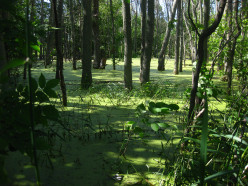 Photographing a Swamp