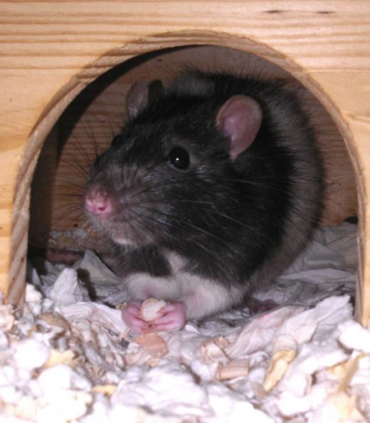 Jeremy enjoys a yogurt treat in his house.
