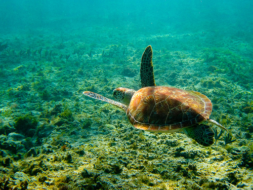 Four species of sea turtle nest on Isla La Tortuga, giving it its name.