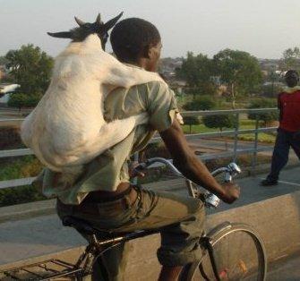 Emergency Animal Care