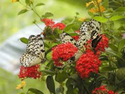 What are the best plants to attract butterflies?