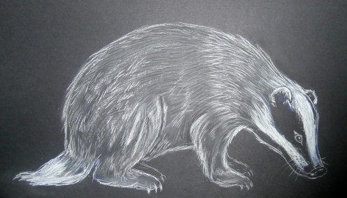 This is the completed Conte pastel badger- and is a great starter animal to try to capture in this medium.
