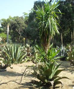 The Botanical Gardens in Lokrum